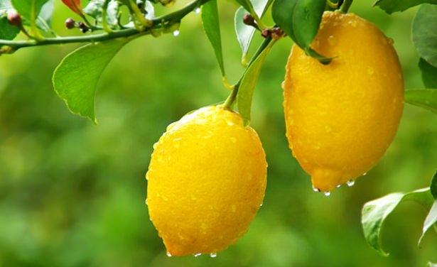 Limonlu su içmeniz için 10 neden
