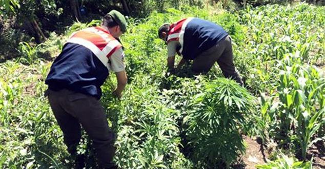 Isparta'da dev uyuşturucu operasyonu