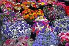 Isparta Yiğitbaşı Çiçekçilik