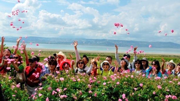 Gül Festivali 11-15 Mayıs tarihleri arasında yapılacak