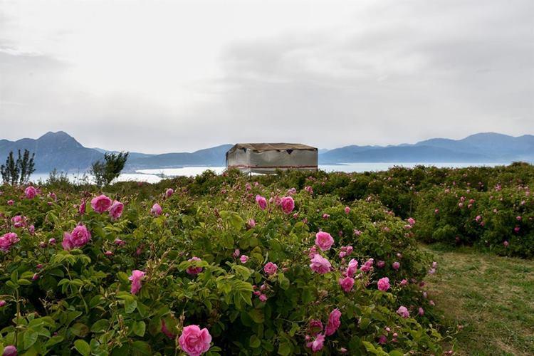 Lavanta ve Gül Eğirdir Gölü'yle Buluşuyor