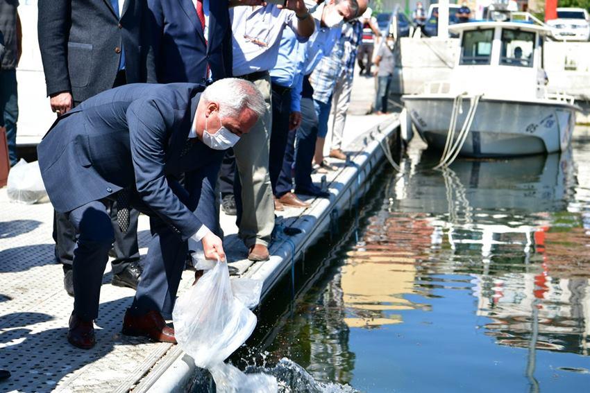 Eğirdir Gölüne 562 Bin Sazan Balığı Bırakıldı