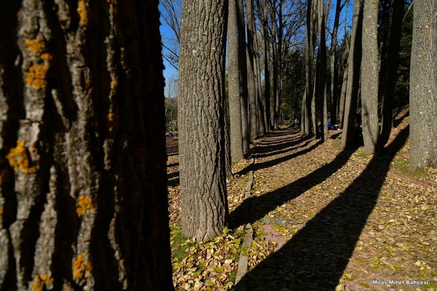 Eşsiz tabiatıyla asırlık ağaçların gölgesinde, gizli bir bahçe görünümündeki Milas için Isparta Valiliği tarafından yürütülen yenileme projesi yapıldı.